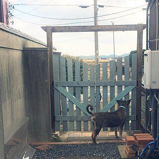 玄関/入り口/犬/DIY/裏庭/裏庭門...などのインテリア実例 - 2014-12-03 20:06:00