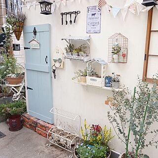 壁/天井/多肉植物/自転車置き場DIY/続きはブログで。のインテリア実例 - 2015-03-15 07:02:26