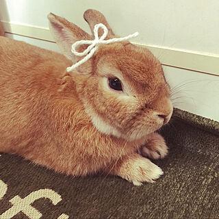 ウサギの人気の写真(RoomNo.3003362)