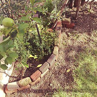 、レモンの木に関するさんの実例写真