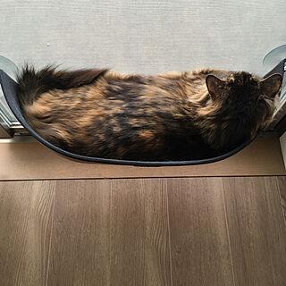 女性39歳の家族暮らし2LDK、猫ベッドに関するmikomaruさんの実例写真