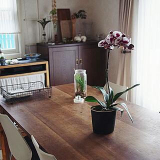 部屋全体/植物のある暮らし/花のある暮らし/暮らしを楽しむ/蘭のある暮らし...などのインテリア実例 - 2020-02-14 13:34:37