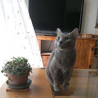 女性家族暮らし4LDK、雑貨 猫雑貨に関するtomo1220さんの実例写真