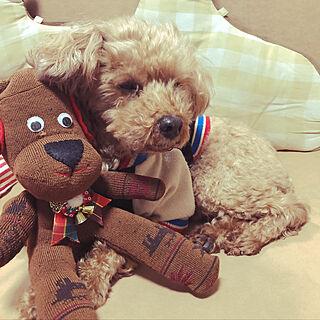 リビング/いつもいいねやコメありがとうございます♡/愛犬と暮らす/愛犬/愛犬と暮らす家...などのインテリア実例 - 2018-10-25 09:04:54
