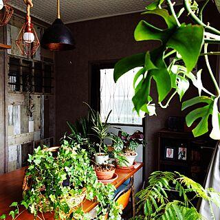 キッチン/観葉植物のある暮らし/観葉植物/観葉植物。/観葉植物のある部屋...などのインテリア実例 - 2017-05-27 09:45:56
