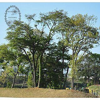 リビング/部屋からの景色のインテリア実例 - 2014-04-27 10:33:35