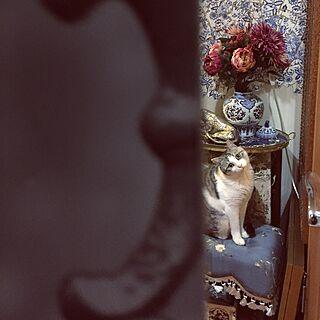 女性一人暮らし1LDK、ジェニファーテイラースツールは猫用に関するemmyyさんの実例写真