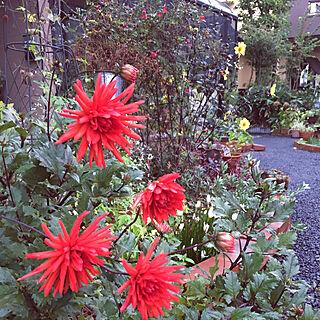 花のある暮らしの人気の写真(RoomNo.3113886)