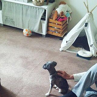 部屋全体/一時帰宅中/犬のいる暮らし/グリーンのある暮らし/チワワ...などのインテリア実例 - 2017-05-23 11:06:15