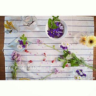 花を摘んで小さな花瓶に挿すの人気の写真(RoomNo.796975)