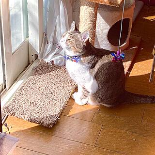 猫のいる家/こだわりの家/洋館インテリア/リビングのインテリア実例 - 2020-02-23 07:25:57