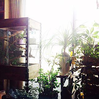 棚/手作りケージ/トックリラン/ベンジャミナバロック/カメレオン...などのインテリア実例 - 2016-04-19 11:51:23