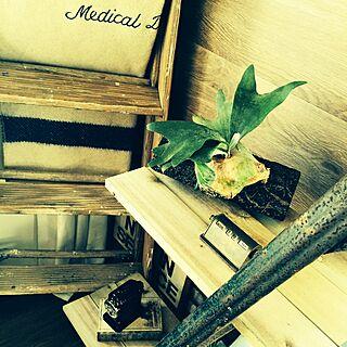 棚/ビカクシダ/こうもりらん/ブランケット/鉛筆削り...などのインテリア実例 - 2015-01-19 12:48:56