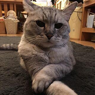 リビング/おばあちゃん猫/猫と暮らす。/猫のインテリア実例 - 2017-06-20 16:59:02