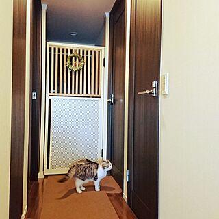 玄関/入り口/三毛猫/スコティッシュフォールド/いつもいいねやコメありがとうございます♡/お気に入りの場所...などのインテリア実例 - 2017-05-05 07:19:53
