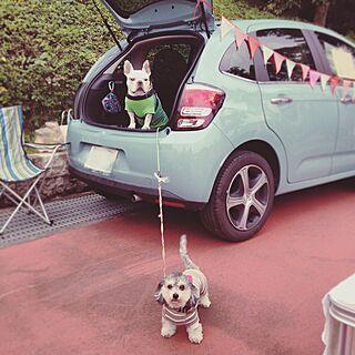 玄関/入り口/ドライブ/愛車/犬と暮らすのインテリア実例 - 2017-03-04 09:49:58
