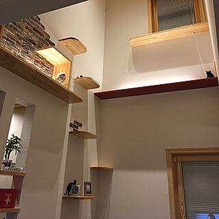 壁/天井/ねこと暮らす。/キャットウォークのある家/キャットウォーク/お気に入りの場所...などのインテリア実例 - 2019-01-28 01:24:52