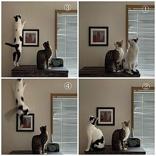 天井に蜘蛛を見つけたネコ/着物の袖/古い訪問着リメイク/古い着物リメイク/ビー 弟 白黒...などのインテリア実例 - 2021-04-24 06:32:42