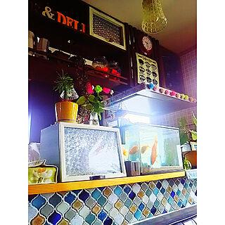 棚/2017.10.02/金魚水槽/金魚/名古屋モザイク...などのインテリア実例 - 2017-10-02 10:15:06