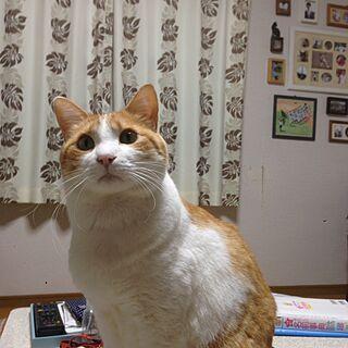 いいね!コメントありがとうございます☆の人気の写真(RoomNo.2204163)