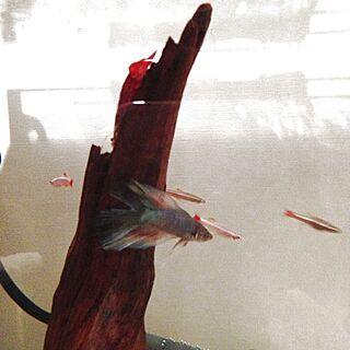 女性家族暮らし3LDK、魚シリーズに関するNanaさんの実例写真