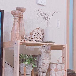 猫と暮らす/建売住宅/RC東海支部/枝物/RC愛知...などのインテリア実例 - 2020-11-30 00:03:25