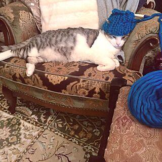 女性一人暮らし1LDK、超極太毛糸に関するemmyyさんの実例写真