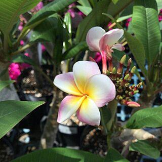 ハワイの人気の写真(RoomNo.2697220)