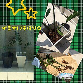 女性42歳の家族暮らし4LDK、ジャングルにしたいのれす!に関するyukiさんの実例写真