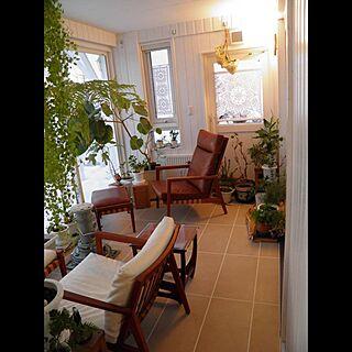 観葉植物/初投稿/サンルーム/リッツウェル/DIY...などのインテリア実例 - 2017-04-09 17:16:03