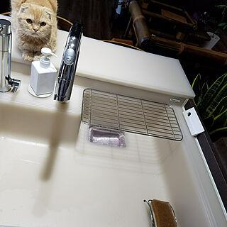 女性家族暮らし3LDK、猫雑貨に関するmamechiiさんの実例写真