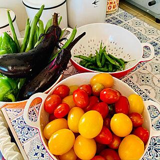 爽やかな朝/家庭菜園の収穫/トマト栽培/野菜の収穫/いいね♪いつもありがとうございます❤️...などのインテリア実例 - 2019-07-26 08:40:46