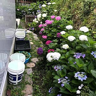 女性33歳の家族暮らし3LDK、Garden*に関するpepeさんの実例写真
