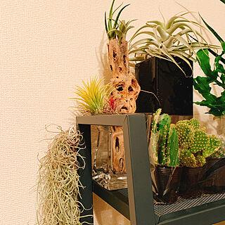 女性35歳の一人暮らし1K、流木×エアプランツに関するKurehaさんの実例写真