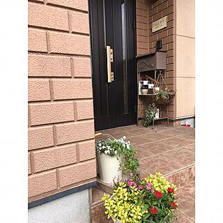 玄関/入り口/花/3COINS/観葉植物/多肉植物...などのインテリア実例 - 2016-11-30 11:18:53