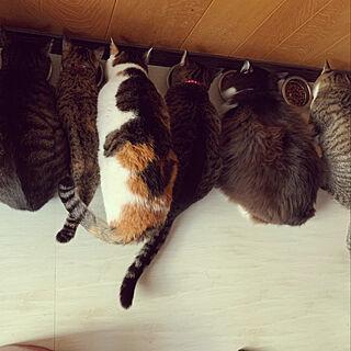 猫スペース/部屋全体のインテリア実例 - 2020-05-01 18:49:32
