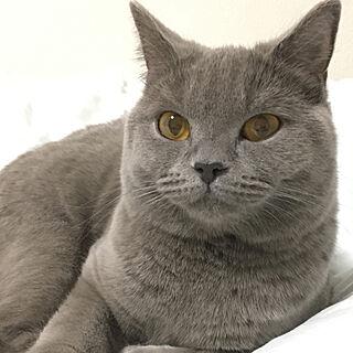 ベッド周り/眠いらしい/ナチュラル/ネコと暮らす/犬猫と暮らす...などのインテリア実例 - 2017-10-26 03:29:08