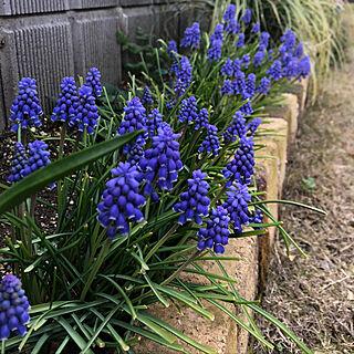 花が好き/こどもと暮らす/春はもうすぐ/植物からの癒し/手作り...などのインテリア実例 - 2020-03-23 05:45:16