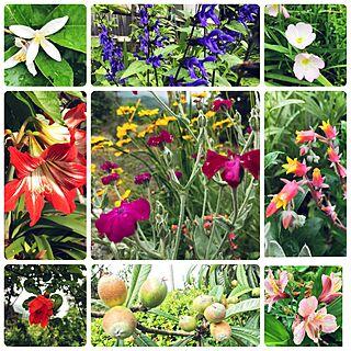 玄関/入り口/まるで植物園みたい/向かいのお家の植物達!/2017.05.25のインテリア実例 - 2017-05-25 14:31:01