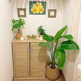 植物と暮らす毎日/植物と暮らす/植物が好き/植物のある生活/植物...などのインテリア実例 - 2019-05-24 08:18:37