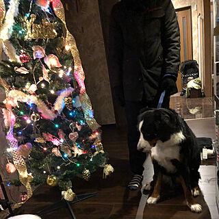女性35歳の家族暮らし、愛犬バーニーズに関するsasaさんの実例写真