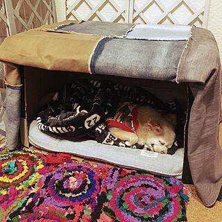 リビング/犬小屋手作り/ダンボールハウス/ダンボール/犬小屋...などのインテリア実例 - 2017-11-05 22:55:11