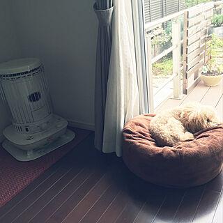 リビング/部屋と関係なくてスミマセン^^;/寝てばかりの犬/いいね!やコメントいつも有難うございます/シンプルライフに憧れ/今日も素敵な1日を♡...などのインテリア実例 - 2017-11-01 10:27:23