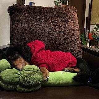 リビング/米軍アンティークチェアー/米軍家具/犬との暮らし/愛犬とリビング...などのインテリア実例 - 2015-10-08 21:46:02