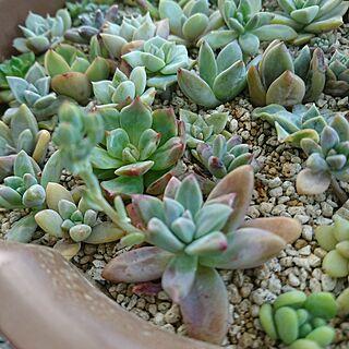 、名前わからない植物に関するmayhgさんの実例写真