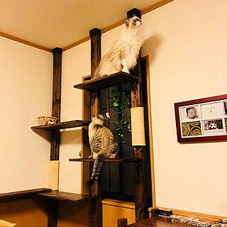 mizu.さんの部屋写真