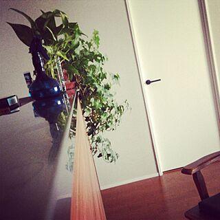キッチン/男前/男前×レトロ/リノベーション/ヴィンテージマンション/観葉植物...などのインテリア実例 - 2014-10-21 11:23:15