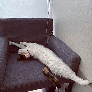 IKEAチェア/ねこがいる暮らし/猫/ねこ/ベッド周りのインテリア実例 - 2020-06-05 22:39:26