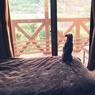 ベッド周り/いいね&フォローありがとうございます☆/今日もお疲れ様です!/ベランダ/犬と暮らす家...などのインテリア実例 - 2017-06-16 19:07:03