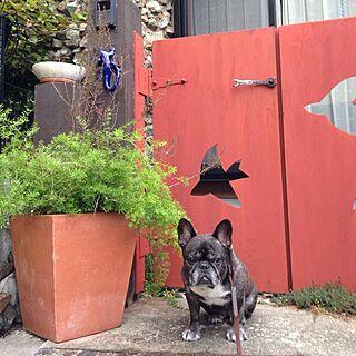玄関/入り口/赤い門/トカゲ/フレンチブルドッグのインテリア実例 - 2013-10-08 18:19:16